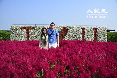 色彩豔紅的火焰雞冠花深獲遊客的喜愛。