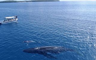 《男人与他的海》群众集资 得以一窥珍贵鲸豚