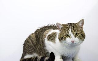 这只土耳其小猫爱看恐怖片 反应超夸张