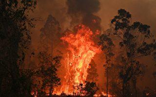 新州昆州山火肆虐 维州将迎来高危林火季
