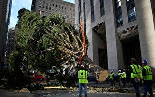 圣诞树运抵纽约洛克菲勒中心