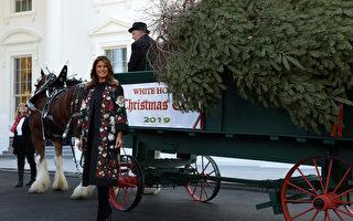 组图:美国第一夫人在白宫迎接圣诞树