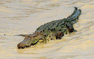 跳到鳄鱼身上挖眼珠 非洲11岁女童勇救同伴