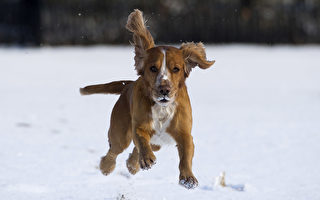 天寒地凍 加拿大流浪狗救了5隻小貓