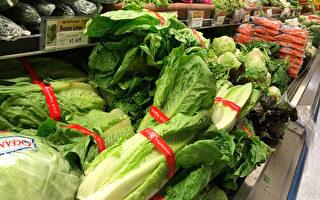 加州蘿蔓生菜引發疫情蔓延 19州67人感染