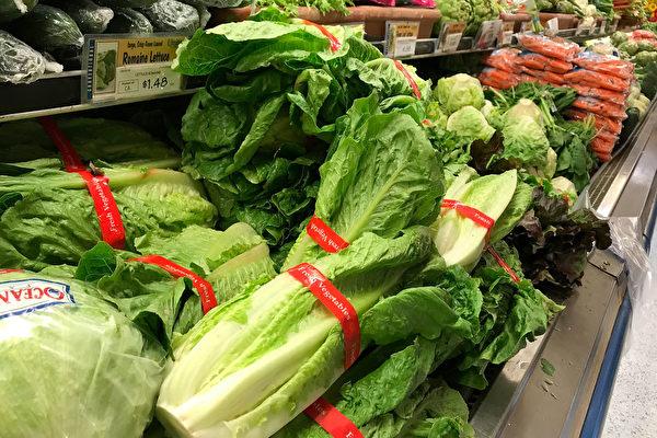 加州萝蔓生菜引发疫情蔓延 19州67人感染
