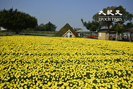 數大即是美的大片金黃色萬壽菊。