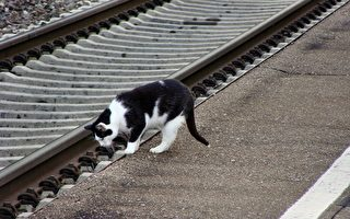 保罗上班啰!孟加拉猫获聘英国车站公关经理