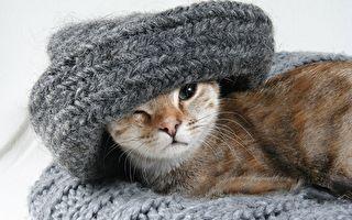 秋冬毛衣吊挂、洗涤、缩水复原3方法一次看够