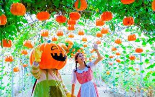观音万圣南瓜节爆红 游客人次累积近20万人