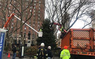 纽约最大节日庆典 林肯广场圣诞树送到