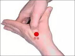 指壓合谷穴(圖為合谷穴位置)。