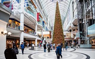 加拿大最高圣诞树11月将在多伦多点亮