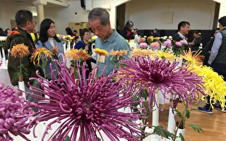 傳承古老花卉栽培   硅谷菊花展吸引各族裔
