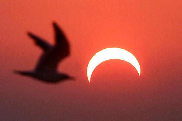 2019年12月26日,在科威特拍攝的日偏食。(YASSER AL-ZAYYAT/AFP)