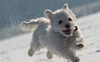 下雪天必看的冬季遛狗指南
