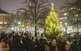 迎佳節 波士頓考布利聖誕樹亮燈了