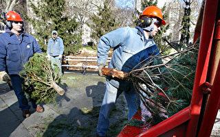 圣诞树可如何回收利用?