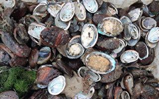 分析:大陆鲍鱼为何卖出白菜价