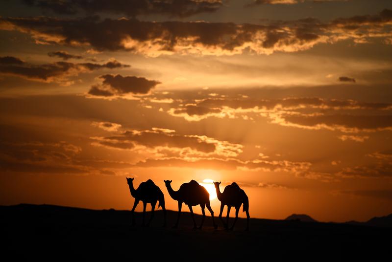 20年代~30年代間,這個起源於印度「騎著駱駝旅行的」瘟疫由俄羅斯到達了德國、英國再傳到加拿大和美國。(FRANCKE/AFP)