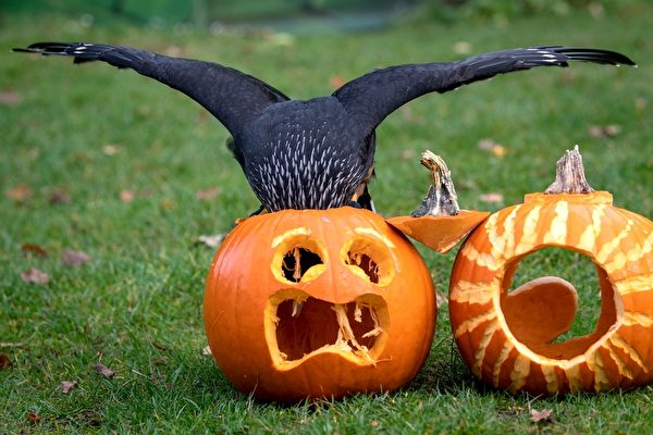 GERMANY-ANIMALS-ZOO-CARACARA-HALLOWEEN