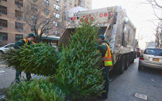 纽约公园局开始回收圣诞树
