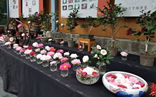 科博館植物園20周年慶 展出罕見茶花品種