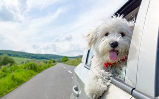 香港首例寵物犬確診 被飼主女富商感染