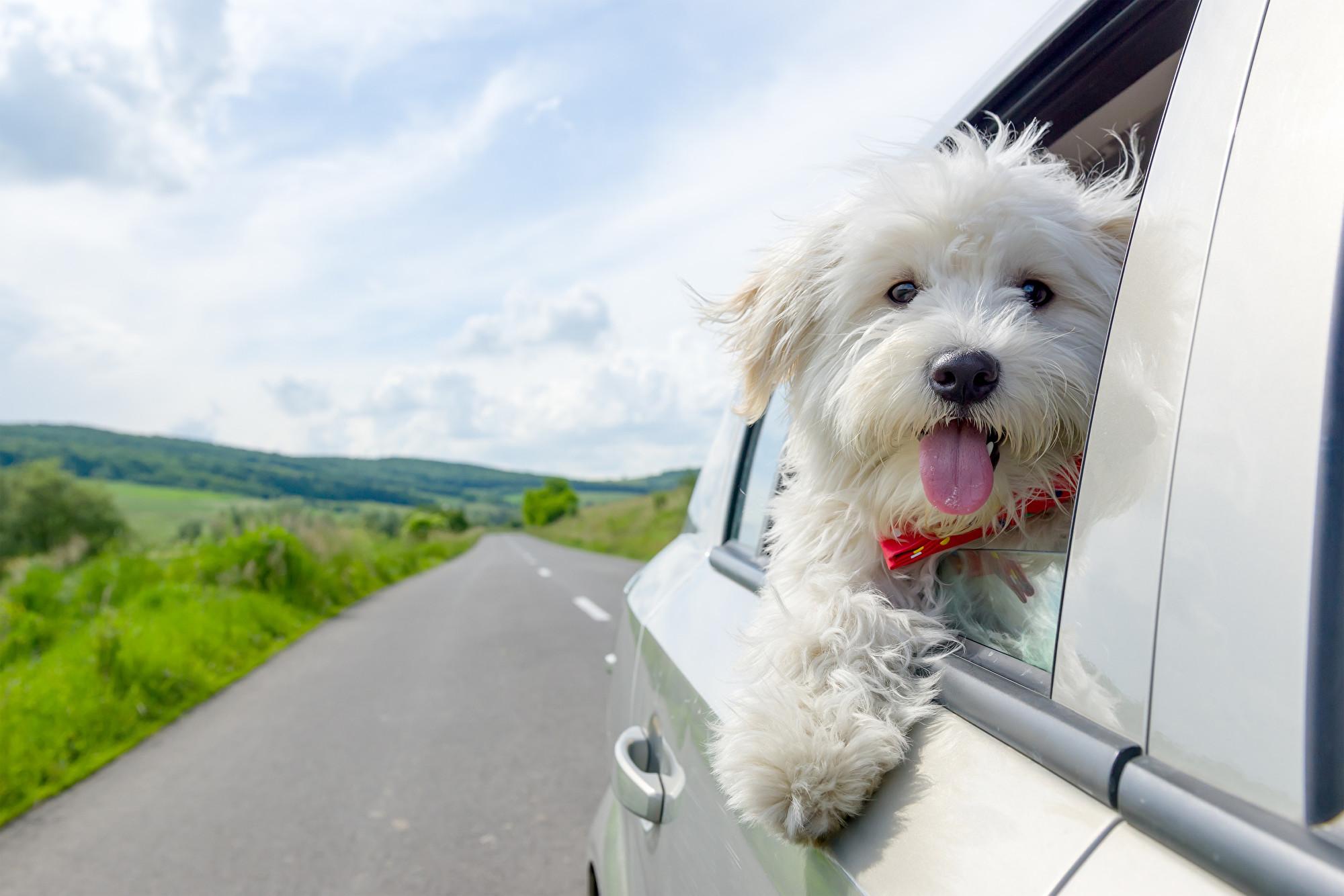 香港首例寵物犬確診中共病毒 被飼主女富商感染