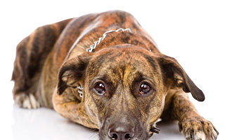 sad mixed breed dog. isolated on white background Fotolia