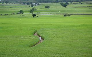 《农村的远见》池上特映 农民:用好米结缘