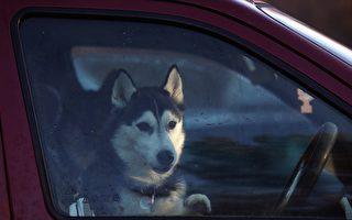 维州去年526只宠物困锁车中获救