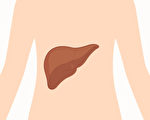 從身體2部位看出肝功能好壞 1招增強肝功能