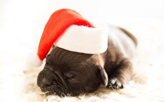 寵物當作聖誕禮 動物收容所吁民眾領養