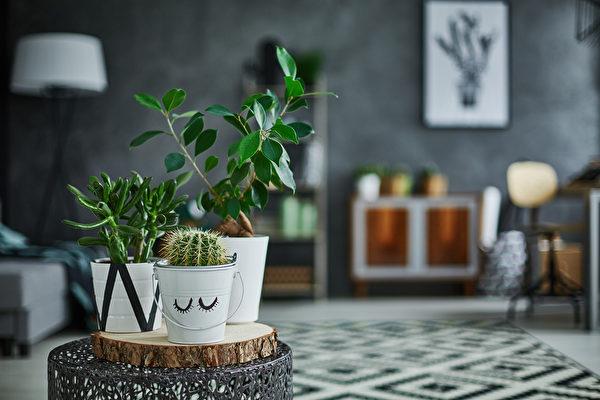 未来各种富创意、具时尚感的摆设方式,将成为拥有室内植物的一大乐趣。(shutterstock)