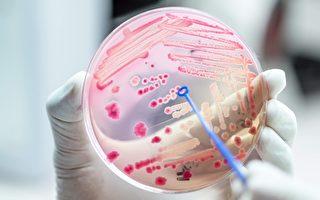 研究:細菌通過彼此聯繫躲避抗生素