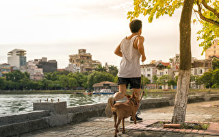 快走或遛狗30分鐘,有助於男性降低血糖和食慾,進一步減輕糖尿病風險。(Shutterstock)