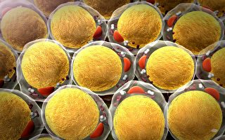研究首次發現二型糖尿病成因及逆轉方法