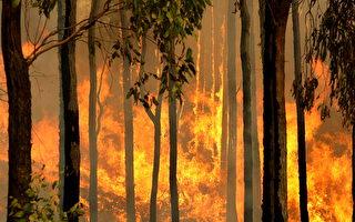 支援澳洲森林滅火 三名美消防員遇難