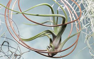 新手也养得活 10种容易照顾的室内植物