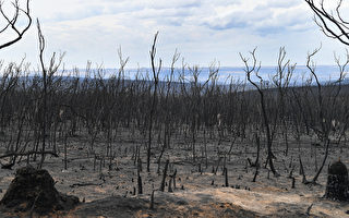 消防员奋力三周 南澳袋鼠岛山火正式得控