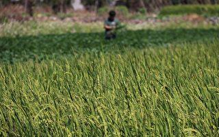 农业环境基本给付受理申报中 请农友把握