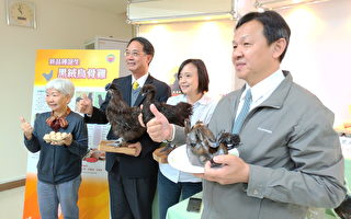 新品种黑绒乌骨鸡诞生 肉质脆甜蛋营养高