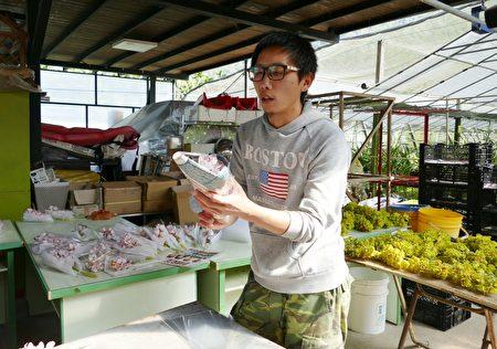 业者忙着打包虎头兰切花,供应插花市场。
