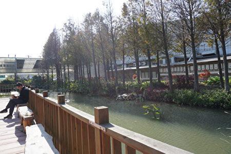 田園餐廳旁的生態池與整排的落羽松