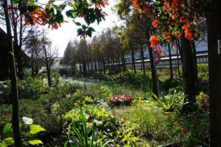 彷彿桃花源的田園餐廳生態池旁,種了一整排的落羽松,及各種水生植物,北徹的綠意步道更是花木扶疏