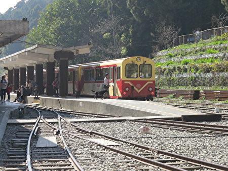 奋起湖车站位在1千公尺以上的高山,住着几百家住户的小山坞,却总有来来往往的游客,满街美食摊位。