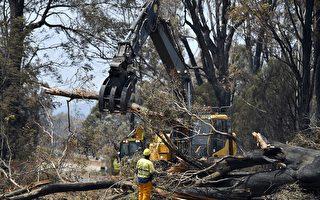 森林火灾制造大量树木杀手 维州8600公里道路需清理
