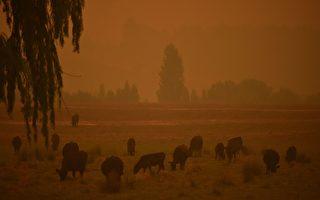 山火引生態災難 聯邦撥5千萬拯救野生動物