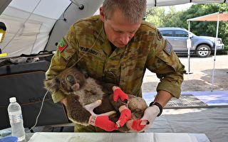 调查:澳山火致近30亿动物死亡或无处栖息